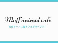 大分オーパに「Moff animal cafe」という猫カフェがオープンするらしい!