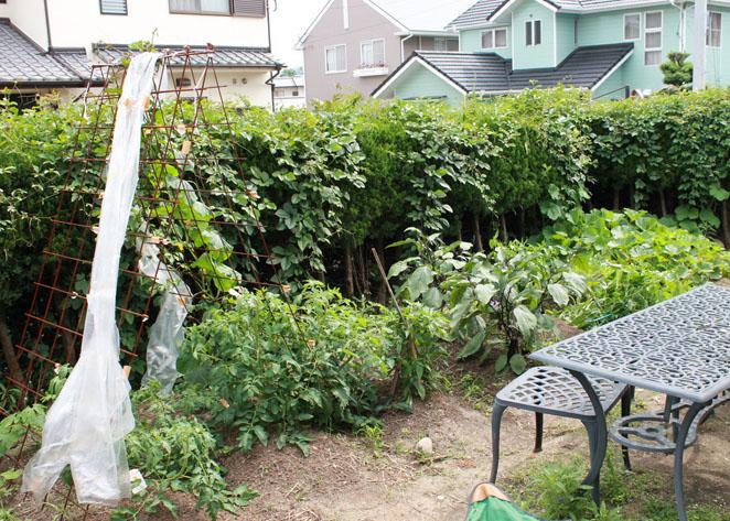 プチ農園がある広い庭