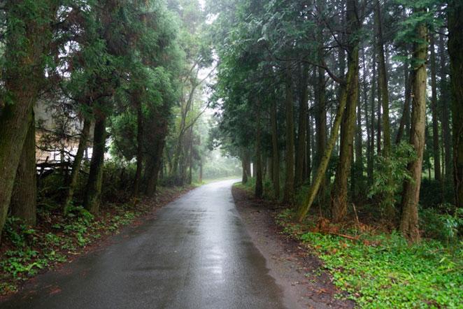 湯布院塚原の森の中