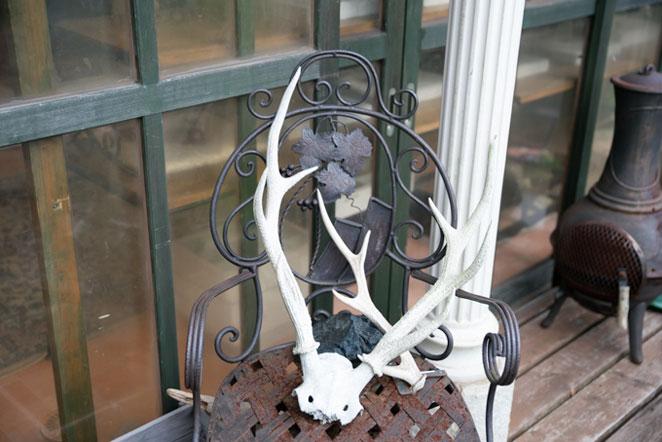 鹿の骨のインテリア